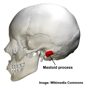 mastoid process location