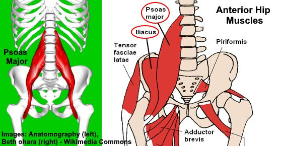 psoas major muscle