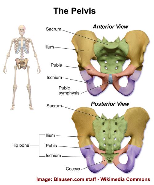 Pelvic Bone Pain Causes And Natural Treatments