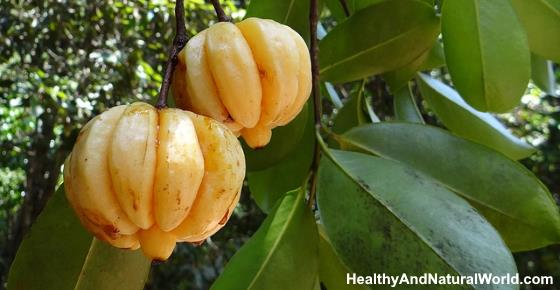 Garcinia Cambogia: Liver Side Effects, Is it Safe & Other Side Effects