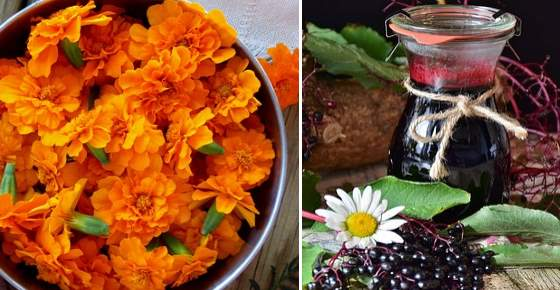 Calendula Tea and Elderberry Syrup for Sore Throat and Cough