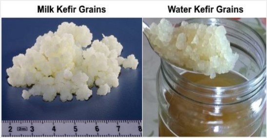 Proven Benefits Of Kefir Milk Yogurt Drink Science Based