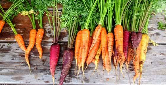 Carrots: Health Benefits and Nutrition Facts (Calories, Carbs, Fiber, Vitamins)