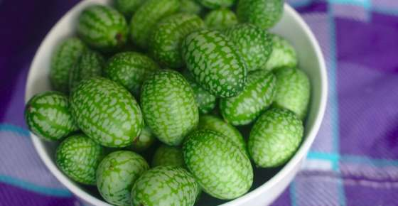 Cucamelon: How to Grow, Nutrition, and Benefits