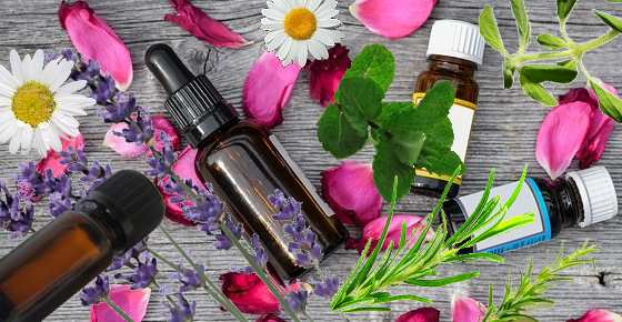 The Best Essential Oils to Have in Your Home