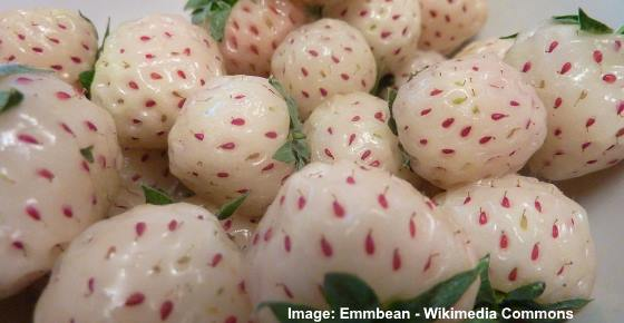 Pineberry: The White Strawberry that Tastes like Pineapple