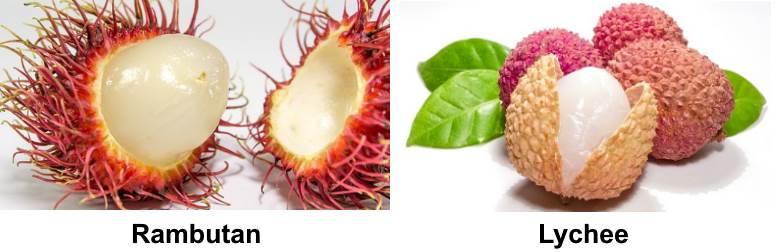 rambutan and lychee
