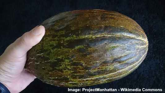 Valencia melon