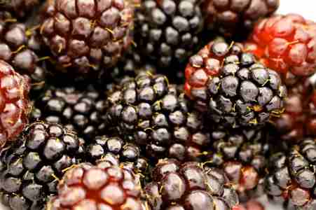 hybrid type of berry