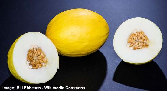 Canary melon is a type of melon with bright yellow and smooth skin