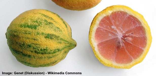 eureka pink lemon