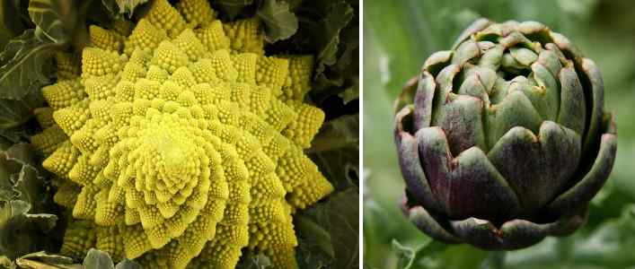 Types of vegetables: edible flowers