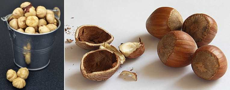 types of nuts pictures