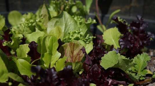 Types of vegetables: leafy vegetables