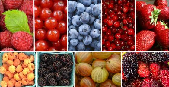 Types of Berries: List of Different Kinds of Berries and Their Benefits