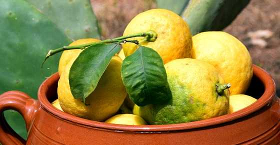 Types of Lemons: Lemon Varieties with Pictures