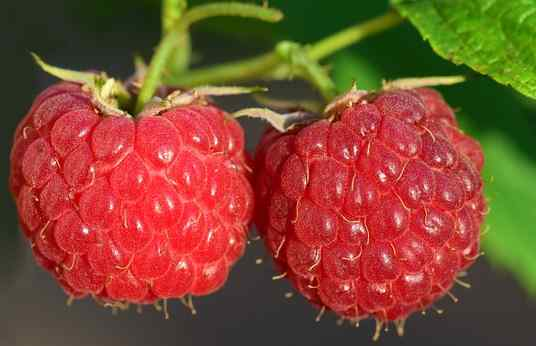raspberries pictures