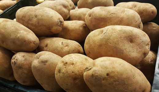 russet potato picture