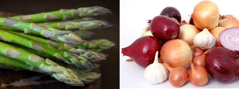 Types of vegetables: examples of bulb and stem vegtables