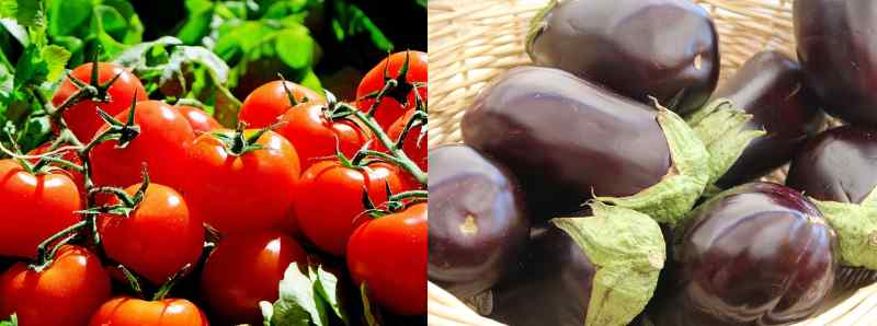 Tomatoes and eggplants are types of vegetables that are botanically classified as fruits