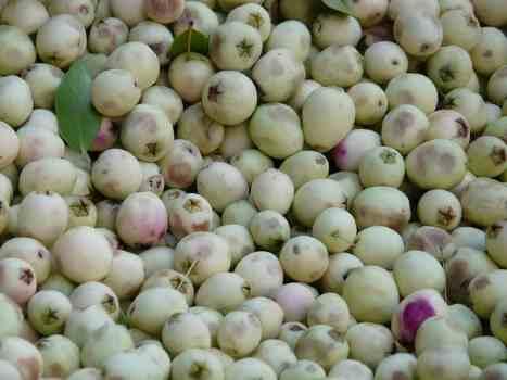 white olives image