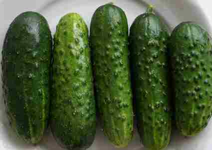 Northern Pickling Cucumber