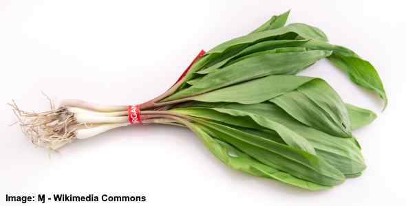 ramp onion