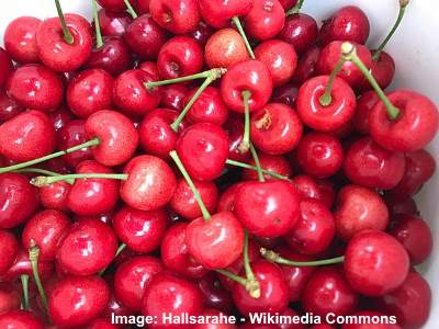 royal ann cherries