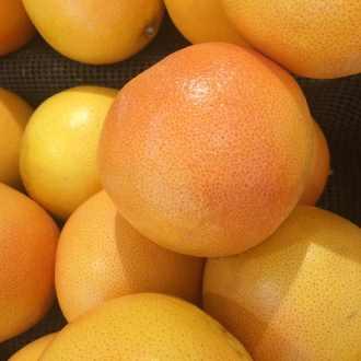 foster grapefruit