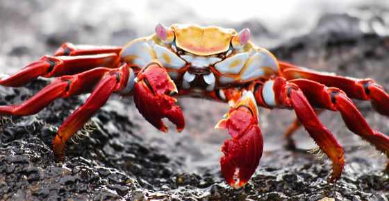 Types of Crabs: Different Kinds of Crabs