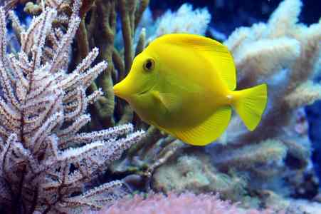 Animal Class: Fish (Vertebrates Category of Animals)