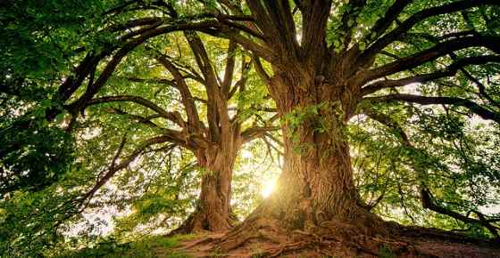 Types of Trees with Their Name and Picture for Easy Identification