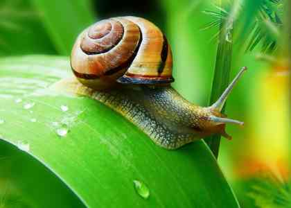 Class of Animals: Invertebrates
