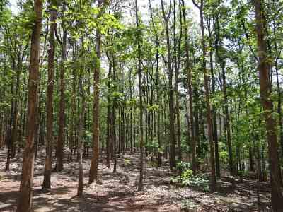 teak-forests