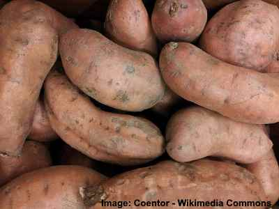 Type of sweet potato - Covington yams