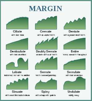 Tree leaf chart: tree leaf margins and edges