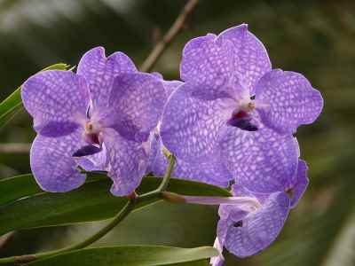 orchids are one of the feng shui plants