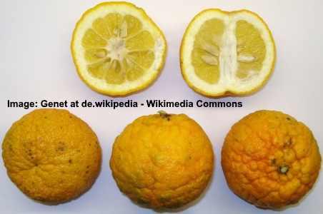 Saville orange