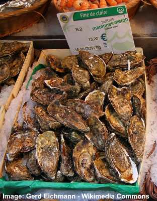 fine de claire oyster