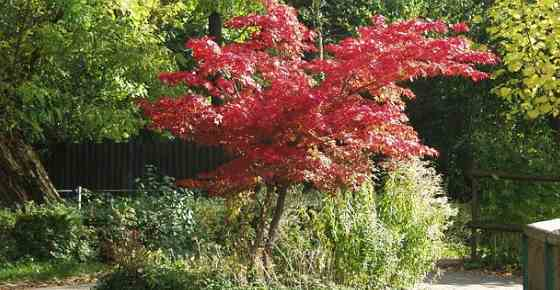 Small Trees for Landscaping Backyard, Front Yard, Small Spaces